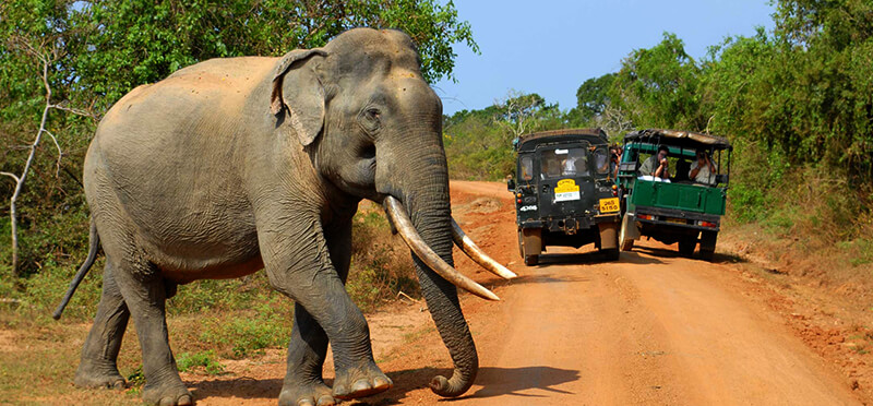 Eco-adventure-tours-in-Sri-Lanka